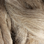 Hemp-Fiber-After-Carding-Long